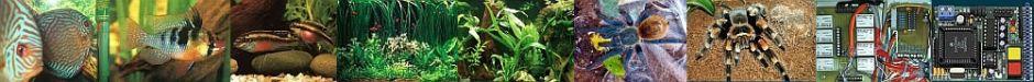 Hardy`s Aquarien - und Vogelspinnenpage